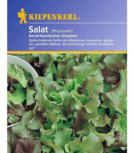Kiepenkerl Pflücksalat 'Amerikanischer brauner',1 Portion