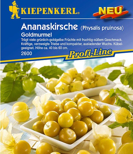 "Kiepenkerl Physalis Pruinosa ""Goldmurmel"",1 Portion"