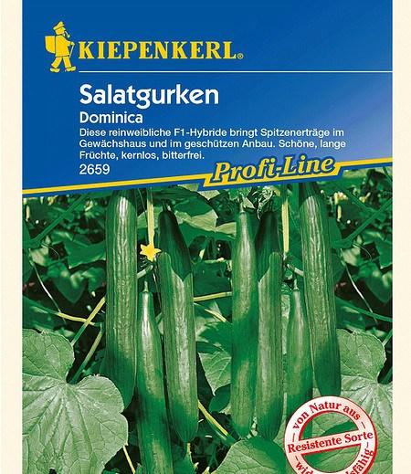 "Kiepenkerl Salatgurken ""Dominica"",1 Portion"