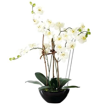 Kunstpflanze Orchideentopf Modern
