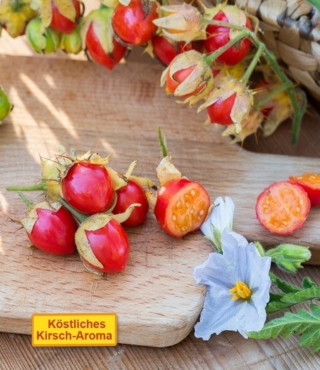 "Litschi-Tomate ""StarBenas"",2 Pflanzen"