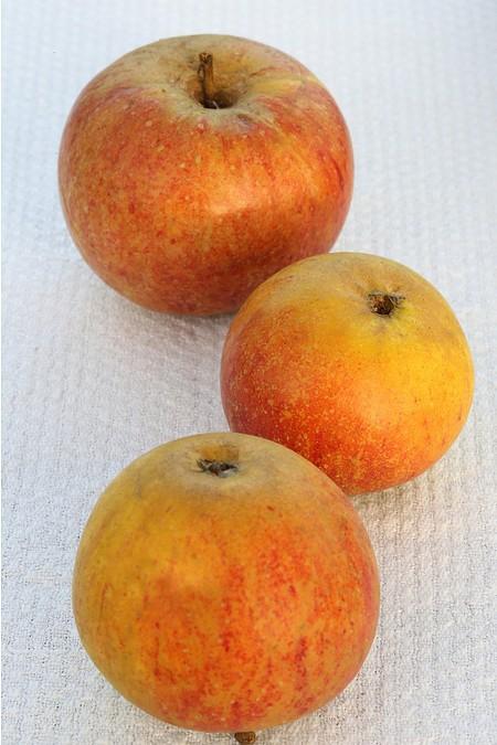 Lubera Apfel Cox Orange - Hochstamm