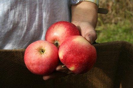Lubera Apfel Paradis® Sierra®