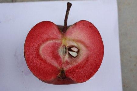 Lubera Apfel Redlove® Calypso®- Hochstamm