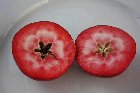 Lubera Apfel Redlove® Circe®- Hochstamm
