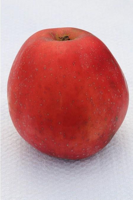 Lubera Apfel Spartan - Hochstamm