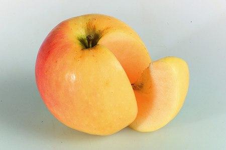 Lubera Easytree: Apfel Paradis® Morgana® Kopie