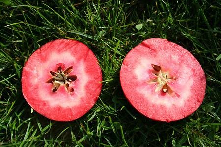Lubera Easytree: Apfel Redlove® Era®