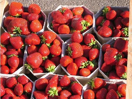 Lubera Erdbeere Mara des Bois 6er Träger