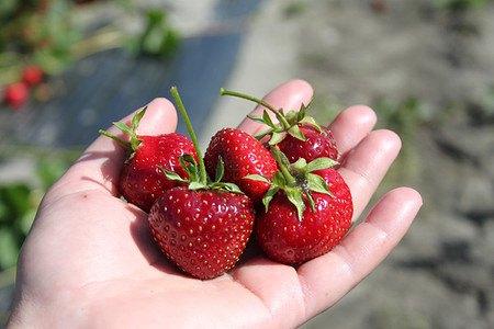 Lubera Erdbeere Parfum® Ewigi Liebi®