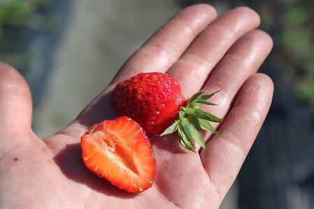 Lubera Erdbeere Parfum Fraisonette®
