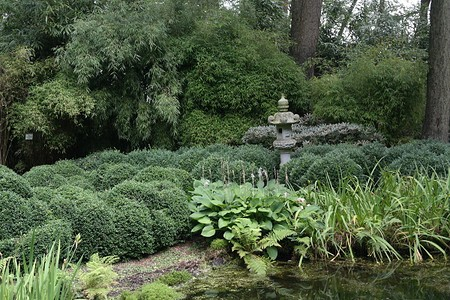 Lubera Schwarzer Knospenbambus, Starke Pflanze im großen 12l Topf