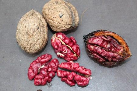 Lubera Walnuss Rosette (Rote Nüsse)