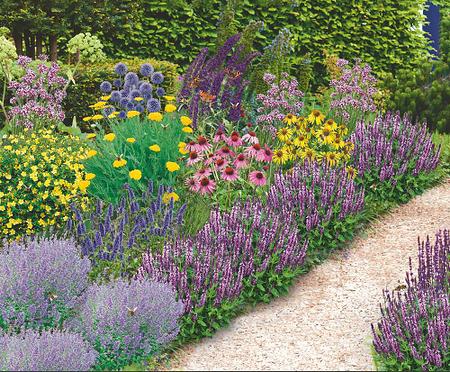"""Mein schöner Garten Bienenfreundliches Gartenbeet """"Nektar-Oase"""", 21 Pflanzen"""