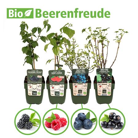 Mein schöner Garten Bio-Pflanzen-Set Beerenfreude