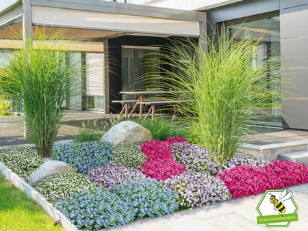 """Mein schöner Garten Bodendecker-Set """"Eyecatcher"""", 19 Pflanzen"""