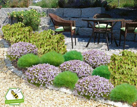 Mein schöner Garten Bodendecker-Set halbschattig, 14 Pflanzen
