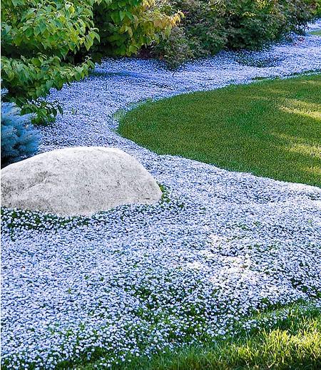 """Mein schöner Garten Bodendecker-Set """"Himmlisches Blau"""" , 15 Pflanzen"""