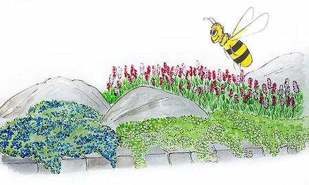 """Mein schöner Garten Bodendecker-Set """"Sonne"""" zum Nachpflanzen, 9 Pflanzen"""
