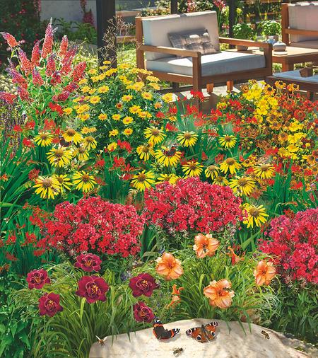 """Mein schöner Garten Gartenbeet """"Insektenweide"""", 31 Knollen + 1 Pflanze"""