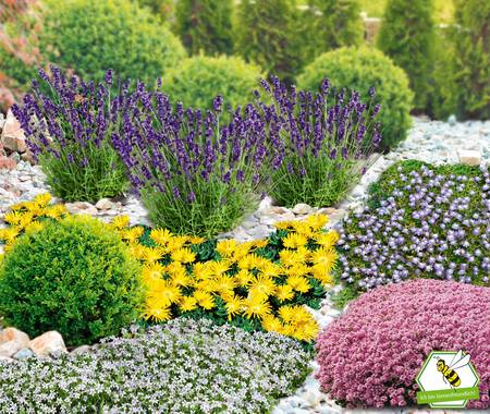 Mein schöner Garten Niedrige Staudenklassiker, 14 Pflanzen