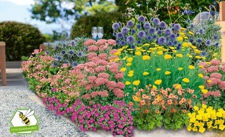 Mein schöner Garten Schneckensicheres Staudenbeet, 20 Pflanzen