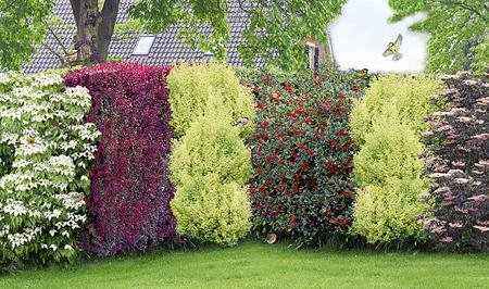 """Mein schöner Garten Vogelschutz-Hecke """"Bird-Lover"""", 16 Pflanzen"""