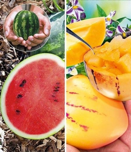 Melonen-Raritäten-Kollektion,2 Pflanzen