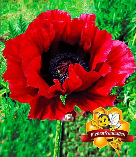 Blumenwiese Anlegen - Mein Schöner Garten Blumenwiese Anlegen Garten