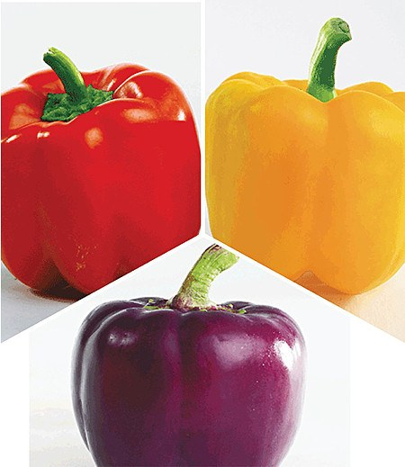 Paprika-Kollektion 3 PflanzenPaprikapflanzen im Mix