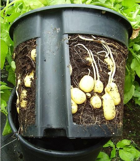 Peküba PotatoPot®,1 Stück