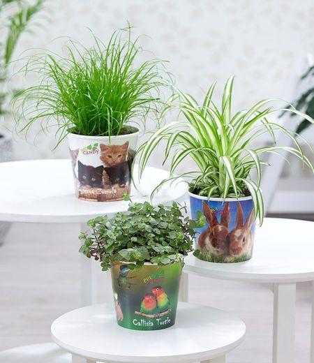 """Pflanzen-Set """"Leckereien für ihr Haustier"""",3 Pflanzen"""