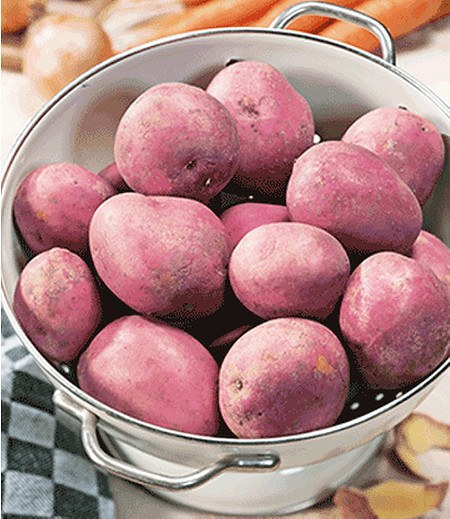 "Pflanzkartoffel ""Desiree"", 10Stück zertifizierte Saatkartoffel"