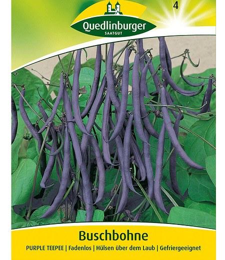 "Quedlinburger Buschbohne ""Purple TEEPEE"" blau,1 Portion"