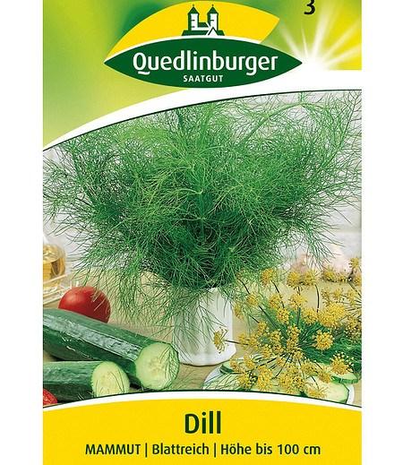 Quedlinburger Gurken-Dill, blattreich,1 Portion