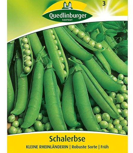 """Quedlinburger Schalerbse """"Kleine Rheinländerin"""",1 Portion"""