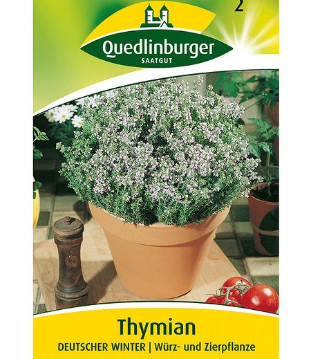 Quedlinburger Thymian mehrjährig,1 Portion