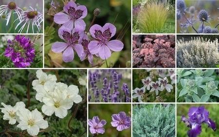 Reiherschnabel Stauden-Beet, 16 Pflanzen