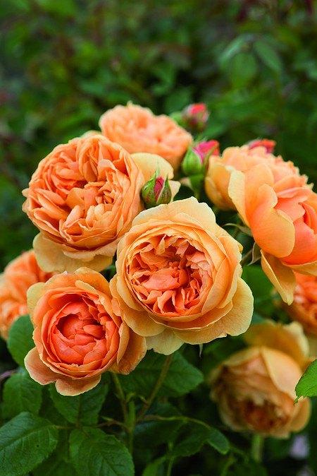 Rose Carolyn Knight
