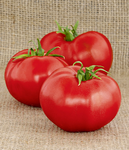 "Rote Tomate ""Berner Rose"",1 Pflanze"