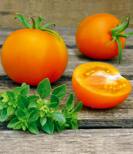 """Salat-Tomate """"Orange Favourite"""",1 Pflanze"""
