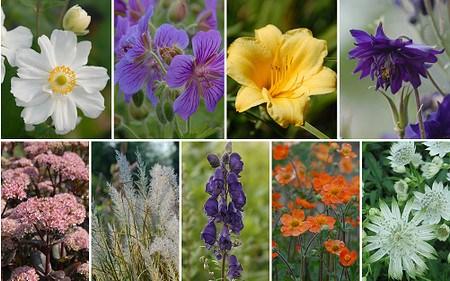 Schneckensicheres Staudenbeet zum Nachpflanzen, 11 Pflanzen