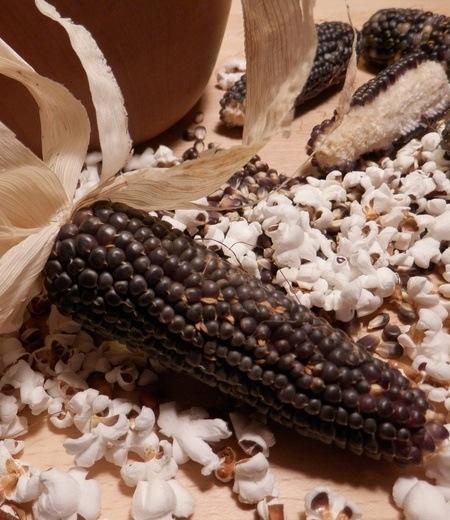 Schwarzer BIO Popcorn-Mais,1 Pflanze