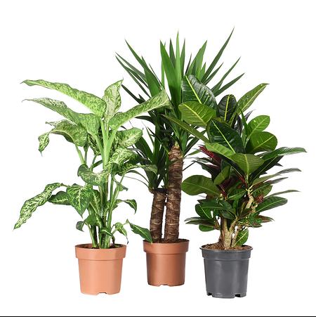 """Sense of Home Zimmerpflanzen-Set """"Sonnig"""" ohne Übertöpfe"""