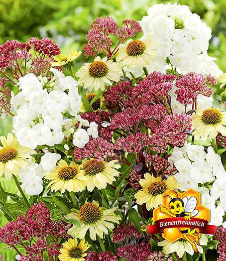 """Stauden-Mix """"Bienenfreund"""",3 Pflanzen"""