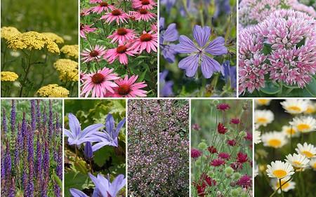 """Staudenbeet """"Gute Laune am Terrassenrand"""" zum Nachpflanzen,12 Pflanzen"""