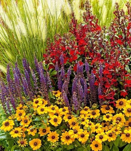 "Staudenbeet ""Olympic Colours"",6 Pflanzen"