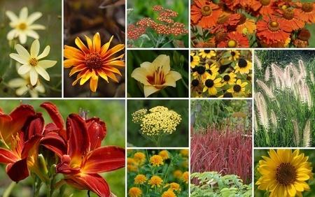 """Staudenbeet """"Sonnenbeet"""" zum Nachpflanzen, 14 Pflanzen"""