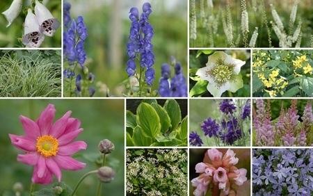 """Staudenbeet zum Nachpflanzen """"Schattiger Willkommensgruß"""", 18 Pflanzen"""