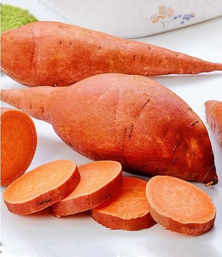 """Süßkartoffel """"Evangeline"""",2 Pflanzen"""